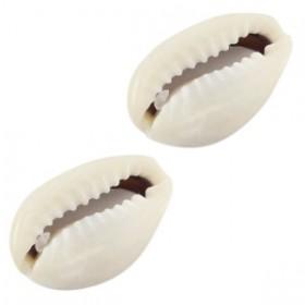 Kauri schelp ca. 17x10mm ivoor grijs