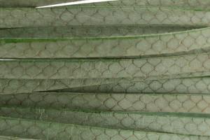 Plat leer met print 5mm croco groen per 20cm
